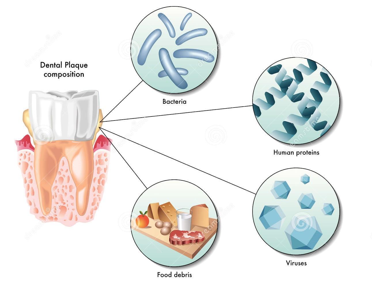 Bacteriile din intestine   Slăbire   battlewom2.ro
